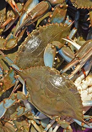 local fresh crabs